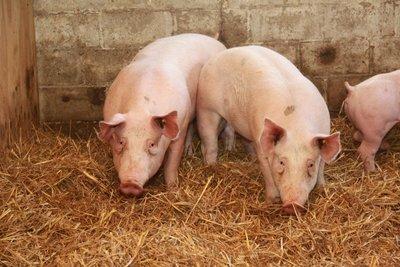 Vers varkensvlees (onverpakt)